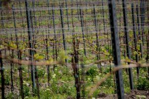 Vinařství pod Radobýlem